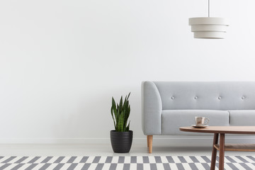Stylish lamp above grey modern sofa in white living room interior with plant, carpet and wooden coffee table, real photo
