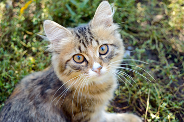 Beautiful kitten on the background of nature, carefully looking. Domestic cat.
