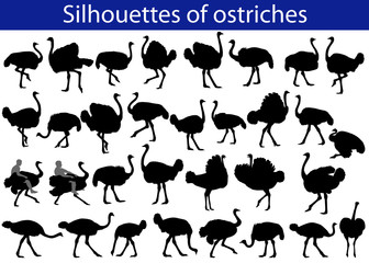 Collection of silhouettes of common ostriches