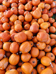 Huge pile of round, bright orange pumpkins for Halloween and Thanksgiving holidays.