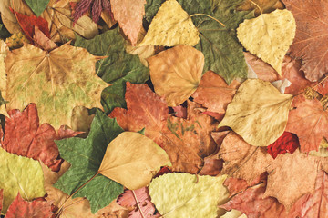 Beautiful colorful autumn leaves background