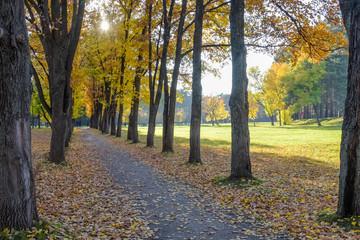 Autumn landscape. Autumn Park.