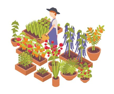Male farmer watering vegetables and flowers growing planters isolated on white background. Eco friendly farming, crops cultivation, organic gardening. Colorful isometric vector illustration.