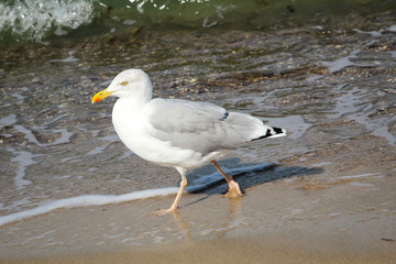 Möwe am Strand, Strandurlaub