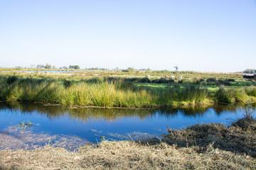 Polder landscape in Holland