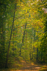 forest path in autumn