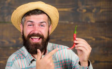 Man hold pepper harvest. Bearded farmer hold pepper in hand. Farmer presenting hot chilli pepper wooden background. Pepper harvest concept. Rustic farmer in straw hat likes spicy taste