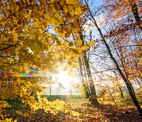 Schönheit des Herbstes, Spätsommer, Indian Summer, wundervolle Farben im Wald, weiches, stimmungsvolles Licht :)