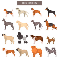 Different dog breeds color vector icons set. Flat design