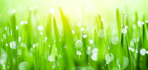 Fresh spring green grass and sun. Beautiful green grass. green background. Green texture.