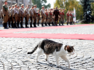 Hungarian President's cat walks before a welcoming ceremony of Turkish President Tayyip Erdogan in Budapest