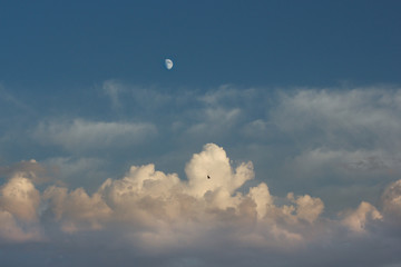 Blue sky with clouds, moon and a bird