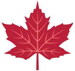 Red maple leaf vector illustration