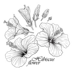 Hibiscus flower set
