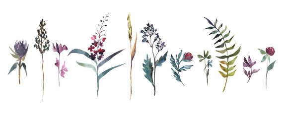 Fototapeta Watercolor illustration. Collection of field flowers. Herbs watercolor set.