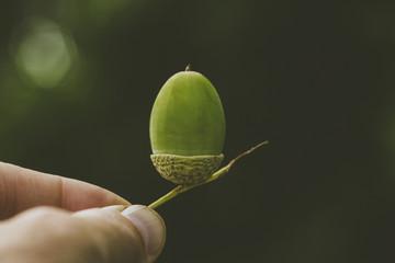 lumberjack forestry oak acorn