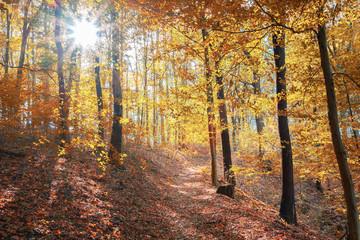 Hebstwald mit Waldweg