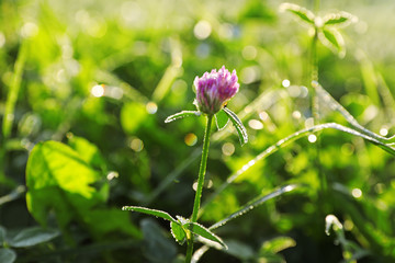 Green meadow with wild flower on summer day, closeup
