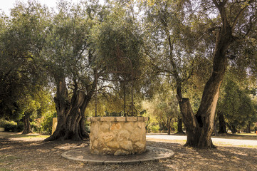 Photo Stands Bonsai Water well among olive trees in French Riviera in a summer day
