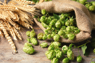 Fresh green hops and wheat spikes on wooden table. Beer production