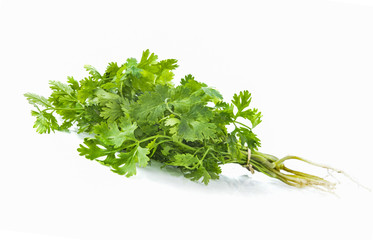 fresh coriander isolated on a white