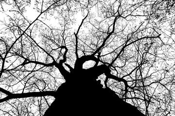 black white photo tree