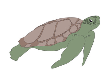 green turtle swim drawing, vector