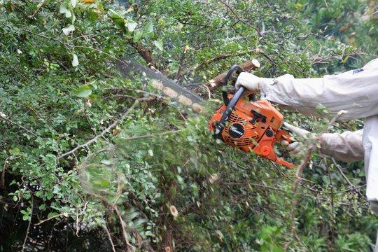 Tree cutting for housing land development