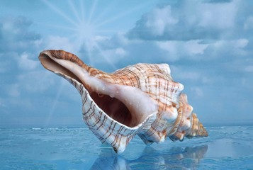 Strandmuschel im Wasser
