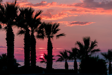 Silhouette of palms trees during sunset