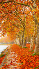 Nice trees in autumn at lake Balaton, Hungary