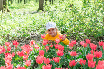 A child, a little girl sniffs fragrant coral tulips in a spring park.