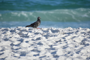 bird on white sandy beach
