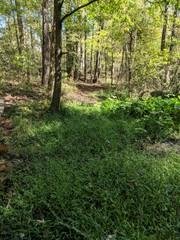 woods near a creek
