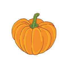Pumpkin illustration. Vegetable organic print. Sticker patch design.
