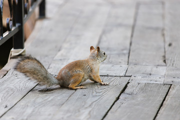 squirrel sitting on a wooden floor