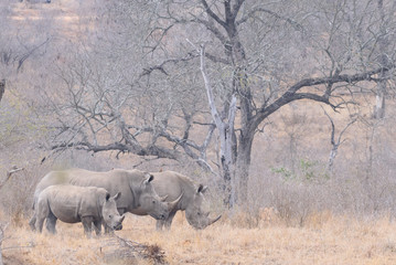 Rhino Southafrica Krueger National Park