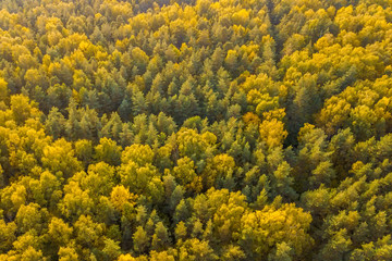 A top view of colourful forest trees