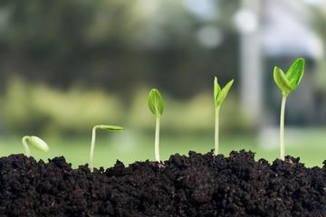 Fototapeta Growth. obraz