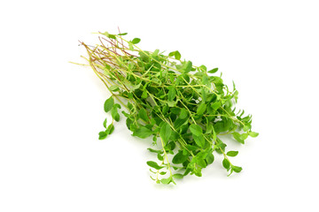 A Bunch of Fresh Raw Wild Thyme. Also Tymus Vulgaris, Common, German or Garden Thyme, Isolated on white Background.