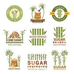 Sugarcane plants. Harvest farm sweets granulated production leaf vector symbols isolated. Sugarcane farm, organic stem illustration