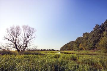 Summer wetland river countryside lush green wood landscape at sunrise