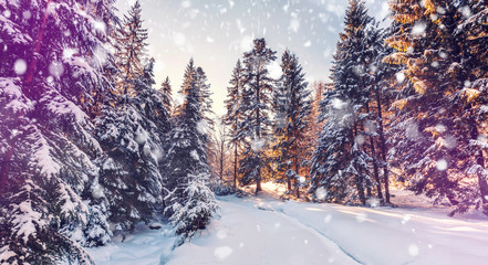 Beautiful winter landscape with snow covered trees. Wintry landscape. snowcovered pine trees under sunlight. road in the forest. retro style. instagram filter