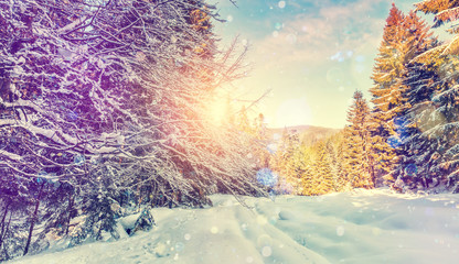 Forest in winter covered by snow. pine trees under sunlight. wintry scene with colorful sky. road in the forest