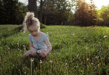 Cute girl picking dandelion from grassy field at park during sunset