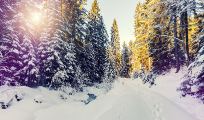 Wonderful wintry landscape. Winter mountain forest. frosty trees under warm sunlight. picturesque nature scenery. creative artistic image. Nature background. poscard. happy xmas.