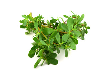 Purslane or Semizotu Traditional European, French, Mexican, Asian and Turkish Salad Snack. Also Wild Portulaca Oleracea, Common Purslane, Verdolaga, Red Root, Pursley. Isolated on White Background.