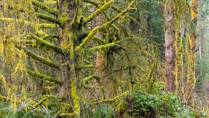 Pacific Northwest Coastal Rainforest