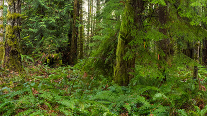 Pacific Northwest Coastal Rainforest
