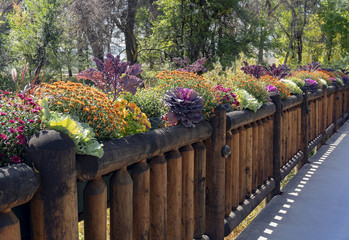 Colorful Fall Flowers Along Wooden Fence